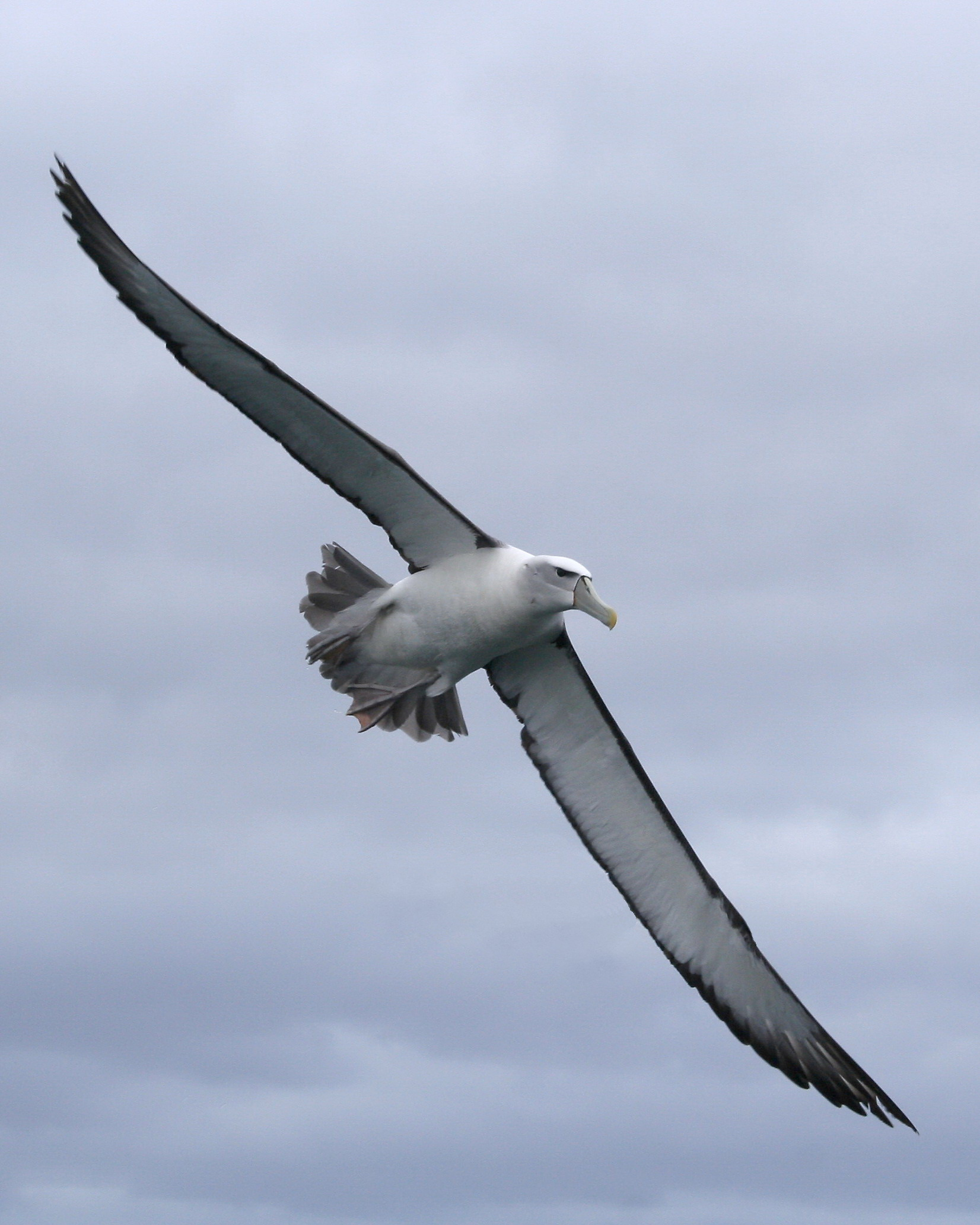 Lost at sea memorials the ancient mariner and the albatross tags biocorpaavc Images